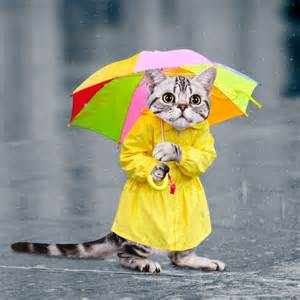 cat umbrella 5 questions with raibot01 general discussion official