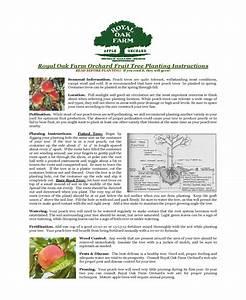 Home Orchard Growing Guide At  Royaloakfarmorchard Com