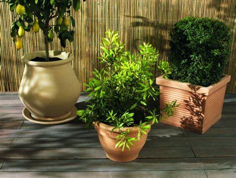quels pots pour quelles plantes entretenez et