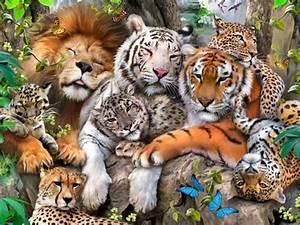 Qual seria sua função em um mundo de felinos?   Quizur