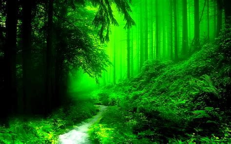 green forest wallpaper nature beautiful green river forest hd wallpaper Beautiful