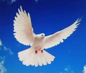 29 ans de mariage ma le crochet jolies colombes de la paix