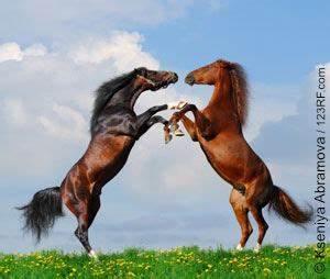 Bilder Von Pferden : erste hilfe f r das pferd die apotheke im stall pronatur24 nat rlich rundum gesund ~ Frokenaadalensverden.com Haus und Dekorationen