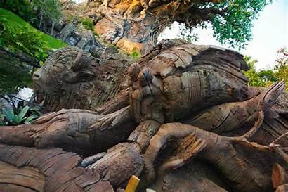 Animal Kingdom Tree Construction Avatar Hidden Parkspotting