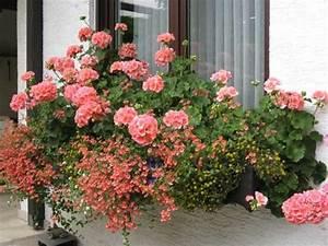 Balkonblumen kurzen seite 1 terrasse balkon mein for Markise balkon mit tapete pink blumen