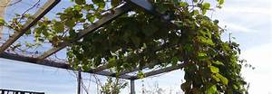 Plante Grimpante Pergola : pergola aluminium pour plante le choix de produits pour la d coration du jardin ~ Nature-et-papiers.com Idées de Décoration