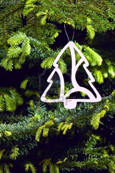 keeping your christmas tree alive furnish burnish