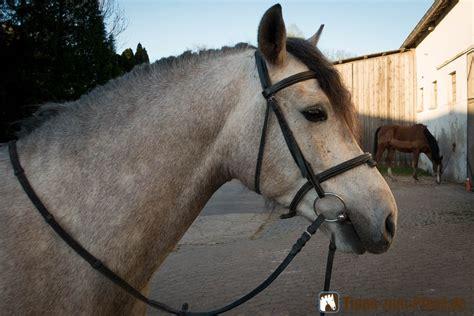 ein pferd aufzaeumen trense anlegen aber richtig tipps