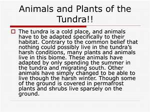 Ppt The Tundra Biome Powerpoint Presentation Id1428086