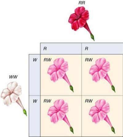 동물의숲 꽃교배로 알아보는 멘델의 유전법칙과 불완전우성 중간유전