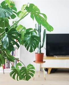 Grande Plante D Intérieur Facile D Entretien : grande plante d int rieur ~ Premium-room.com Idées de Décoration