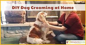 Diy dog grooming at home basic dog grooming and how to for Dog grooming at home
