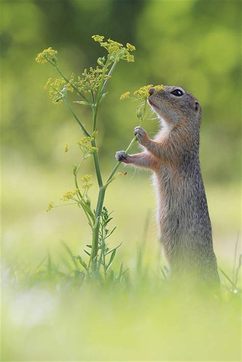 time  smell  flowers pictures