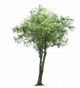 Tree 917 - Trees - Landscape scenery
