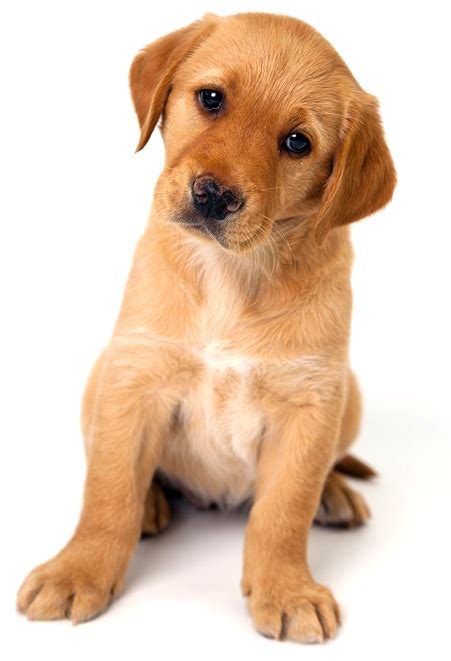puppy pictures puppy dogs pictures www pixshark com images galleries with a bite