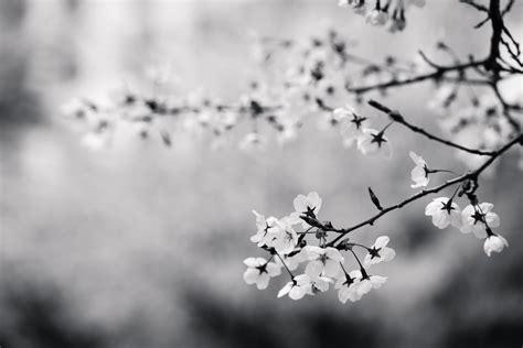 schwarz weiß bilder sprüche die 48 besten tolle schwarzwei 223 e hintergrundbilder
