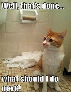 10 Funny Pet Memes