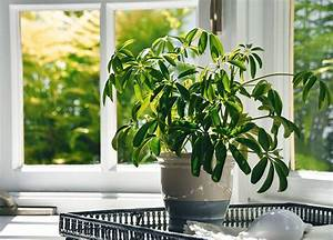 Benefits, Of, Houseplants, Less, Than, Thought, But, Still, Considerable