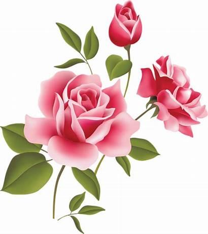 Rose Pink Clip Flower Clipart Three Clker