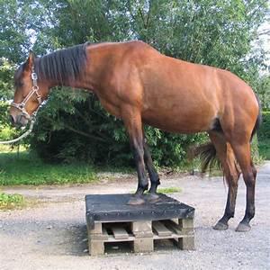 Podest Pferd Selber Bauen : sicher verladen und fahren teil 5 pferdekosmos ~ Yasmunasinghe.com Haus und Dekorationen