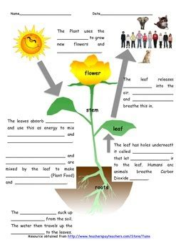 photosynthesis worksheet by tams teachers pay teachers