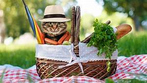 Tips For A Perfect Picnic Plus Recipes