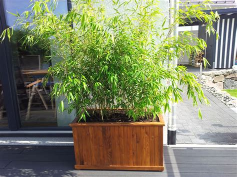 Pflanzen Als Sichtschutz Für Terrasse by Bambus Als K C Bcbelpflanze Bambus Als Sichtschutz Im