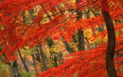 Leaves Autumn Fall Desktop Leaf Background Backgrounds