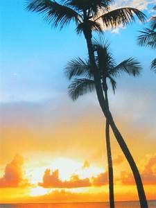 Bilder Von Palmen : palmen im sonnenuntergang foto bild landschaft meer strand haff bodden bilder auf ~ Frokenaadalensverden.com Haus und Dekorationen