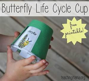 1000  Images About Butterfly Life Cycle On Pinterest