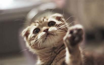 Katzen Pantalla Fondo Gatti Gatitos Animals Gatito