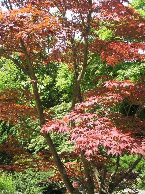 Japanischer Garten Sträucher by Image