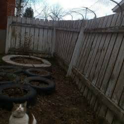 how to keep cats out of yard inescapable cat yard andrew kurjata medium