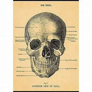 Skull Diagram Wrapping Paper    Poster
