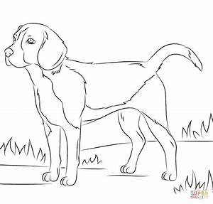 Beagle dog coloring page | Free Printable Coloring Pages