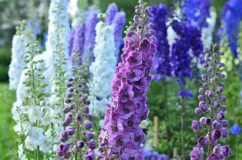 Garten Pflanzen Im Juli by Gartentipps Im Juli Ziergarten Gartenzauber