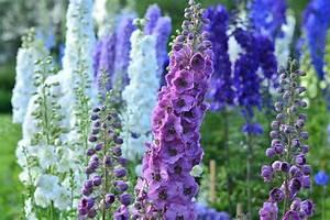 Blumen Im Juli : gartentipps im juli ziergarten gartenzauber ~ Lizthompson.info Haus und Dekorationen
