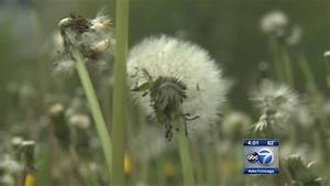 Chicago weather: Highest tree pollen count in history ...