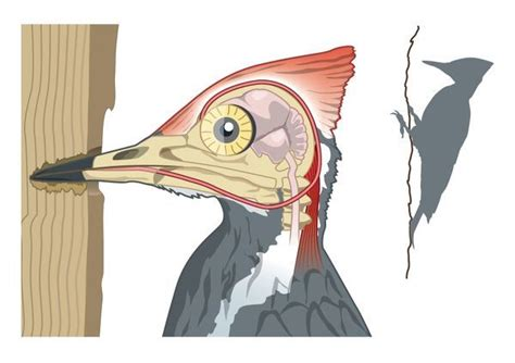 digital illustration showing woodpeckers shock  print