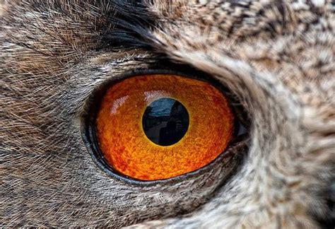closeup  animal eyes xcitefunnet