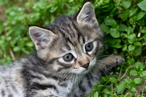 common cat phobias   manage  canna pet