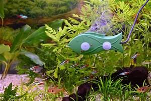 Sauerstoff Im Aquarium : interview quereinsteiger in der aquaristik wie eine ~ Eleganceandgraceweddings.com Haus und Dekorationen