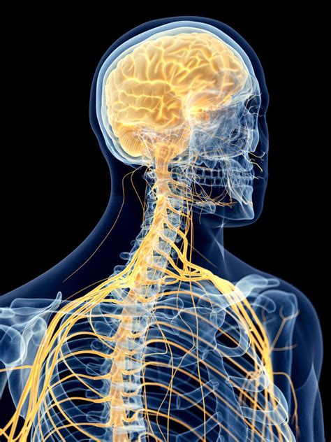 ast opc stem cell therapy  offer  hope  spinal