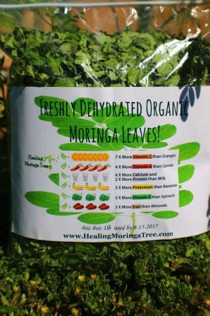 moringa dried
