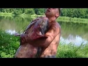Piranha Attacks - Piranha Attacks Video - Piranha Fish ...