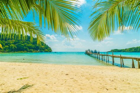 beautiful tropical beach and sea with coconut palm tree in
