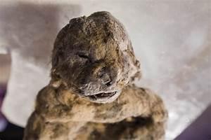 The History Blog » Blog Archive » Frozen cave lion cubs ...