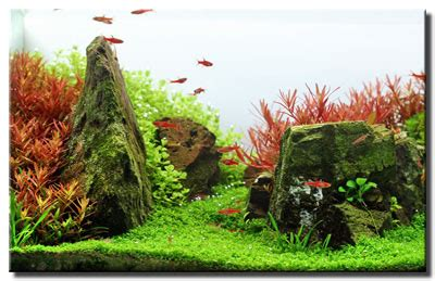Most Beautiful Aquascapes by July 2011 Aquascape Of The Month Quot Antelope