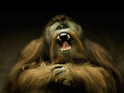 scary monkey  animals background wallpapers