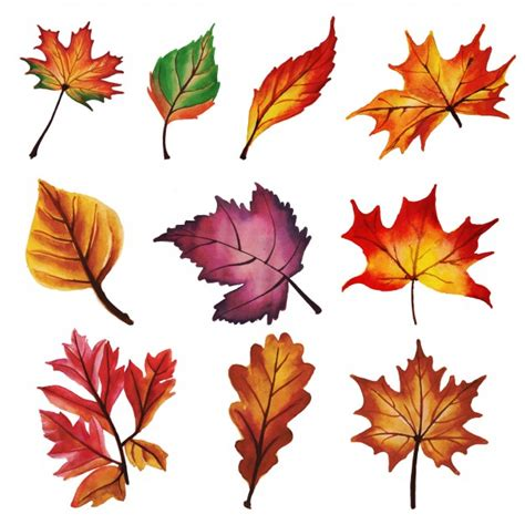 picture frame without autumn leaves collection vector free
